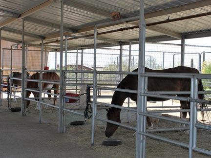 Horses in covered pipe stalls