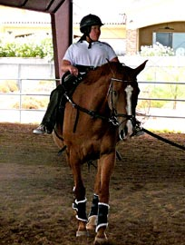 horsesCliffy003
