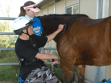 volunteer and student grooming horse