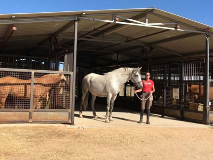 Woman standing at entrance to barn, holding grey Andalusian mare