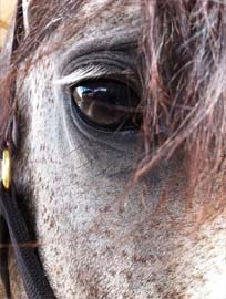 closeup of Barbara's eye